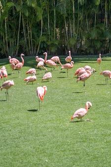 Verticale opname van een groep flamingo's in de dierentuin