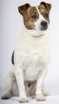 Verticale opname van een hond op een wit oppervlak