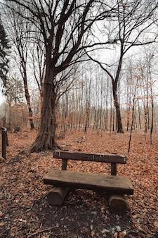 Verticale opname van een houten bankje in een bospark met een sombere lucht op de achtergrond