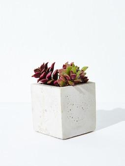 Verticale opname van een kamerplant in een betonnen bloempot op een witte achtergrond