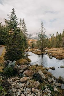 Verticale opname van een kleine stroom water die op een bewolkte dag door een bosrijk herfstgebied stroomt