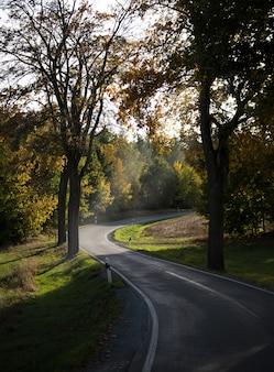 Verticale opname van een kronkelende weg in het park