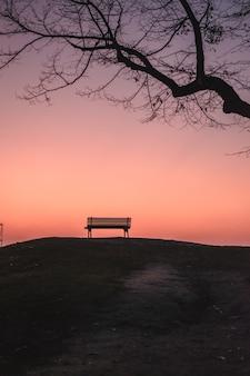 Verticale opname van een lege bank onder een bladerloze boom tijdens zonsondergang