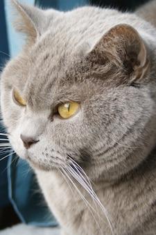 Verticale opname van een leuk katje met groene ogen die uit het raam staren