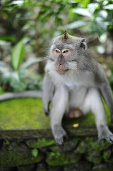 Verticale opname van een makaak zittend op een rotsoppervlak bedekt met mos