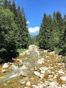 Verticale opname van een ondiepe rivier die door de rotsen stroomt tussen de uitgelijnde groene bomen