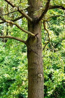Verticale opname van een oude boom met veel takken in het bos