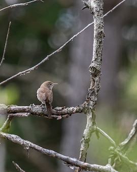 Verticale opname van een ouderwetse vliegenvanger op een boomtak
