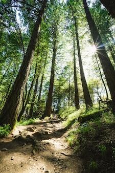 Verticale opname van een pad de heuvel op, omgeven door bomen en gras met zonlicht dat doorschijnt
