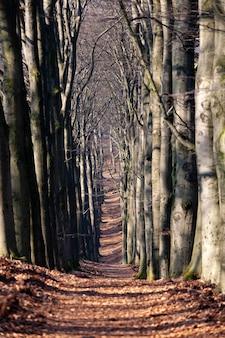 Verticale opname van een pad in het midden van hoge bladerloze bomen overdag