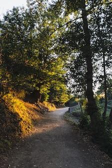Verticale opname van een pad met zonlicht erop