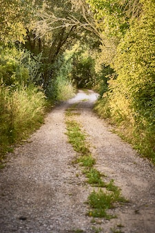 Verticale opname van een pad omgeven door bomen op een zonnige dag