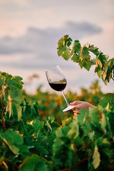 Verticale opname van een persoon die een glas wijn vasthoudt in de wijngaard onder het zonlicht
