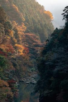 Verticale opname van een prachtige bergrivier omringd door kleurrijk herfstgebladerte op een mistige ochtend