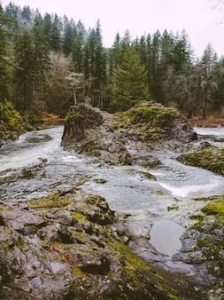 Verticale opname van een rivier omgeven door bomen en rotsen bedekt met mos overdag