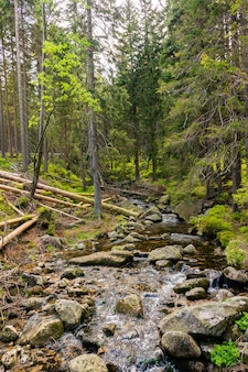 Verticale opname van een rivier vol stenen in het bos met hoge bomen