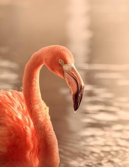 Verticale opname van een roze flamingo in water