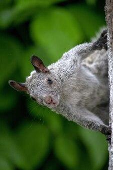 Verticale opname van een schattige eekhoorn op een boom in het bos
