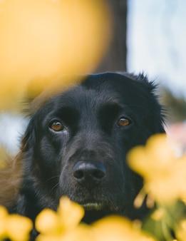 Verticale opname van een schattige hond die naar de camera kijkt