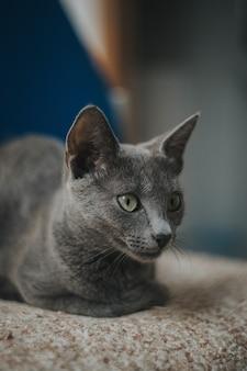 Verticale opname van een schattige kat met groene ogen