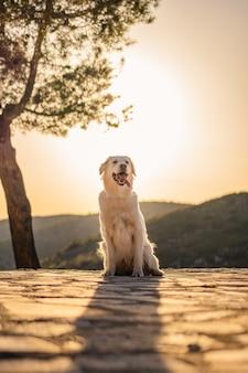 Verticale opname van een schattige labradorhond die tijdens zonsondergang op een berg zit