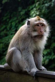 Verticale opname van een schattige makaak aap