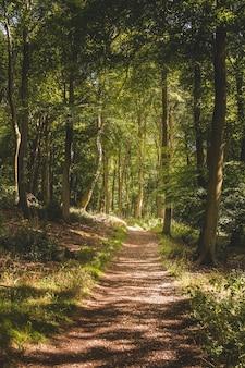 Verticale opname van een smal pad in een bos met veel hoge groene bomen