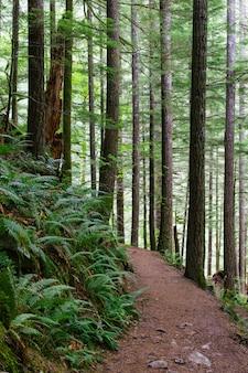 Verticale opname van een smal pad in het bos omgeven door hoge bomen en andere groene planten