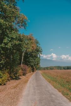 Verticale opname van een smalle weg omgeven door prachtige bomen met kleurrijke bladeren