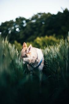 Verticale opname van een tsjechoslowaakse wolfshond in een veld met hoog gras bij daglicht