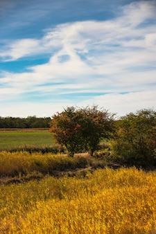 Verticale opname van een veld met bomen en een blauwe lucht