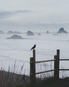 Verticale opname van een vogel die zich op een hek met een wazige zee bevindt