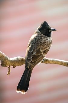 Verticale opname van een vogel op de tak van een boom in het bos