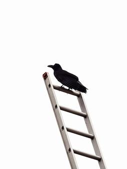 Verticale opname van een zwarte kraai die op een metalen ladder staat