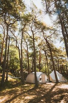 Verticale opname van enkele tenten in het midden van een bos vastgelegd in madeira, portugal
