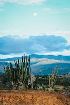Verticale opname van exotische wilde planten in de tatacoa-woestijn, colombia