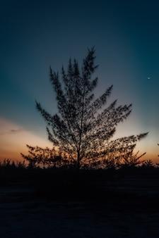 Verticale opname van het silhouet van de boom tijdens zonsondergang