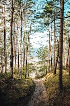 Verticale opname van hoge bomen in het bos