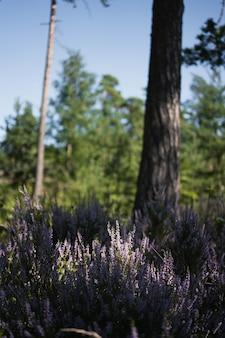 Verticale opname van lavendel in een veld bedekt met groen onder het zonlicht