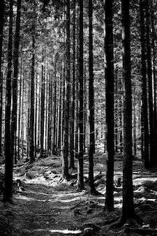 Verticale opname van pijnbomen in het bos