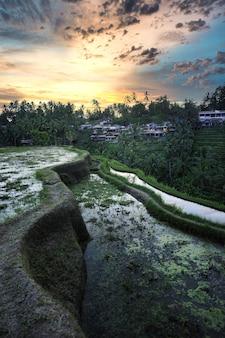 Verticale opname van rijstterrassen in bali, indonesië