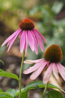 Verticale opname van twee roze bloemen naast elkaar