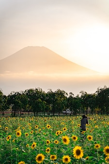 Verticale opname van zonnebloemen in het veld met een berg