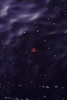 Verticale overhead schot van een enkele rode bloem drijvend op een watermassa