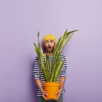 Verticale schot van bang blanke man houdt grote groene kamerplant in pot, geschokt door veel werk in de bloemist winkel, mond wijd open houdt, draagt gestreepte kleding