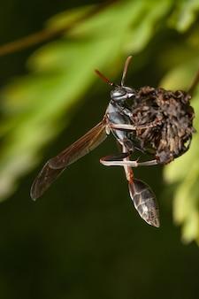 Verticale selectieve aandacht shot van een insect