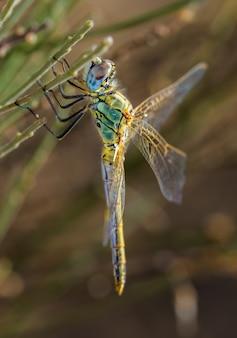 Verticale selectieve focus close-up van een libel in hun natuurlijke omgeving.
