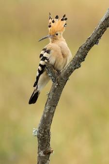 Verticale selectieve focus shot van een exotische zwarte en oranje vogel zittend op de tak van een boom