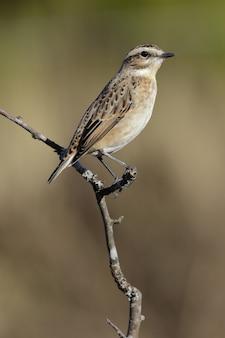 Verticale selectieve focus shot van een mooie mus zittend op de dunne tak van een boom