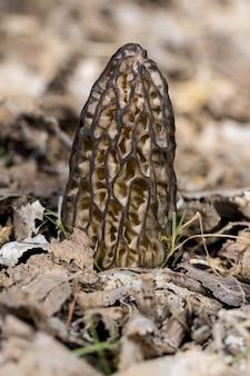 Verticale selectieve focusopname van een vreemde paddenstoel in het midden van de droge grond